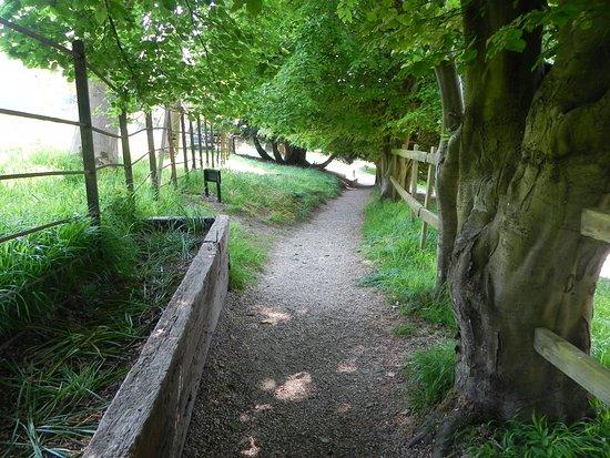 Stonor Park & Gardens: path to walled garden