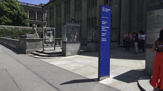 Musee Paleontologique de Zurich照片
