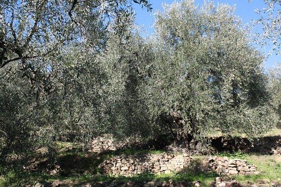 Riviera Bici Outdoor: oliveto
