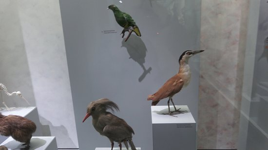 Zoological Museum: Zoologisches Museum