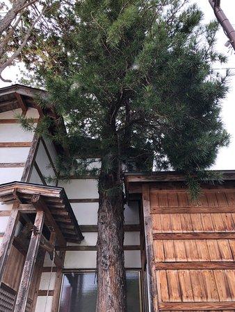 Yunohana Onsen Kobo no Yu: 大きなマキの木がシンボル