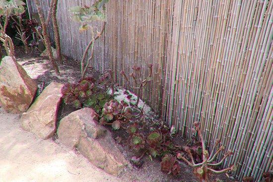 Heronswood: Cacti