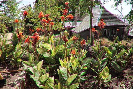 Heronswood: Flowers