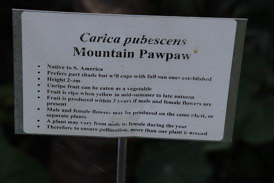 Heronswood: Mountain Pawpae
