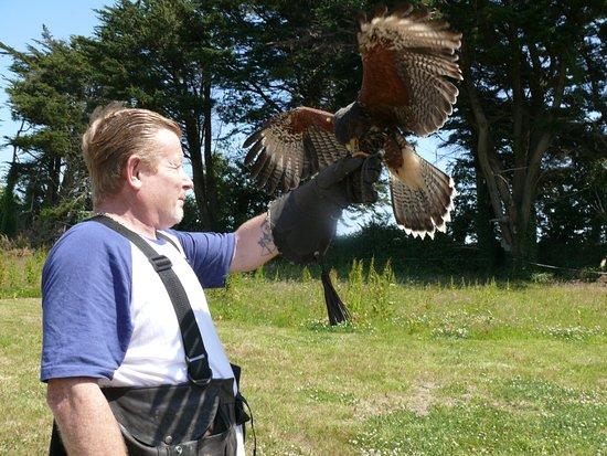 Kilmacthomas, Ireland: hawk landing