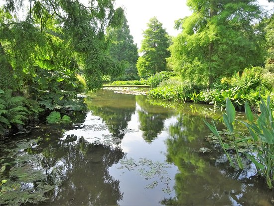 The Beth Chatto Gardens: The Water Gardens - reflections.