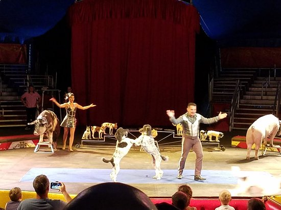 Circus World: 20180702_110951_large.jpg
