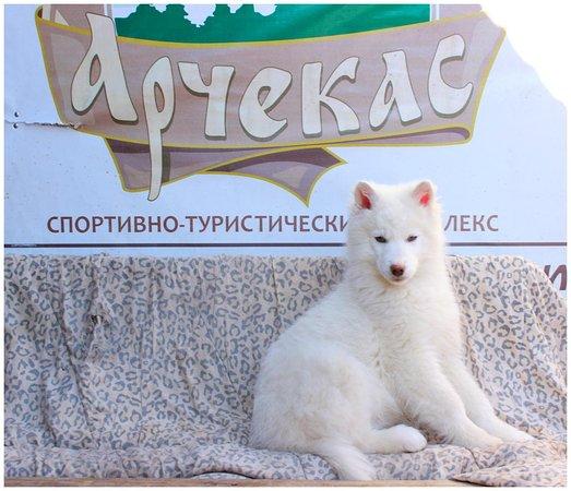 Kemerovo Oblast ภาพถ่าย