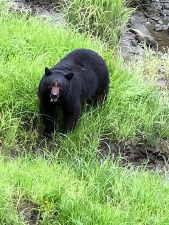 Alaska Rainforest Sanctuary照片