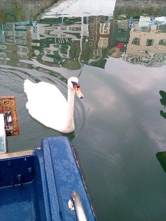 Inner Harbour照片