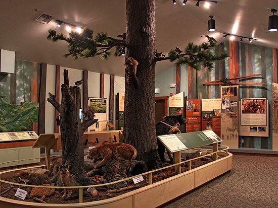 Arnold, CA: Calaveras Big Trees Museum. Photo by:Lisa Boulton
