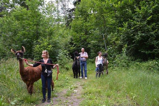 Triesenberg, Liechtenstein: Walking the Lamas.