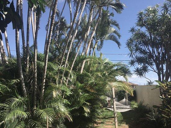 Maui Garden Oasis Image