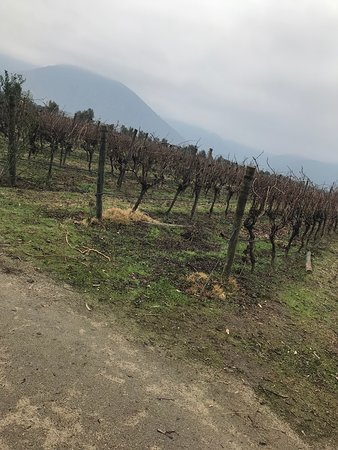 Emiliana Organic Vineyards: Emiliana