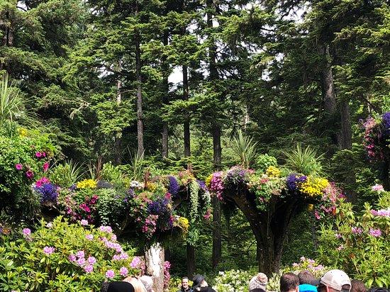Glacier Gardens Rainforest Adventure照片
