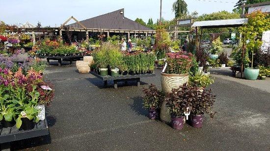 Molbak's Greenhouse and Nursery
