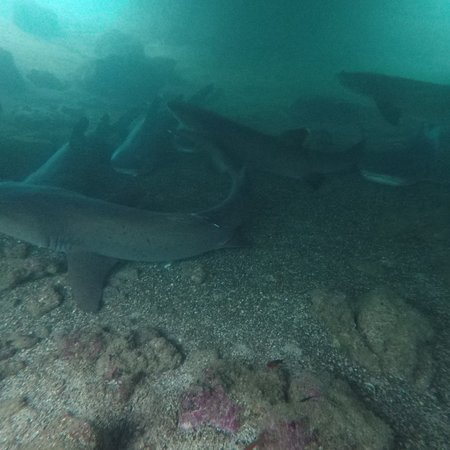 Isabela Dive Center照片