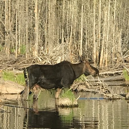 Moosehead Lake: photo4.jpg