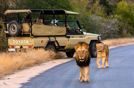 Kruger National Park 2Days&1night...