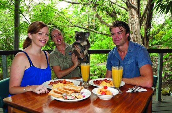 パームコーブからのハートリーのワニの冒険でのコアラとの朝食
