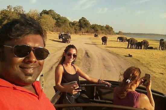Safari dans les parcs nationaux...