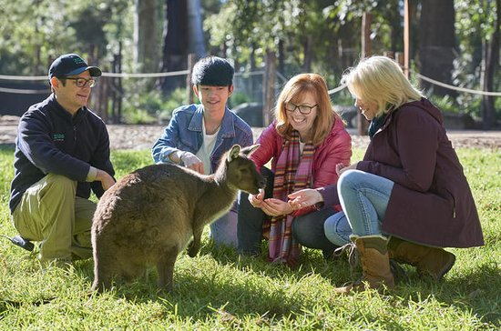 ヒールズビル・サンクチュアリーでのオーストラリアの野生動物体験
