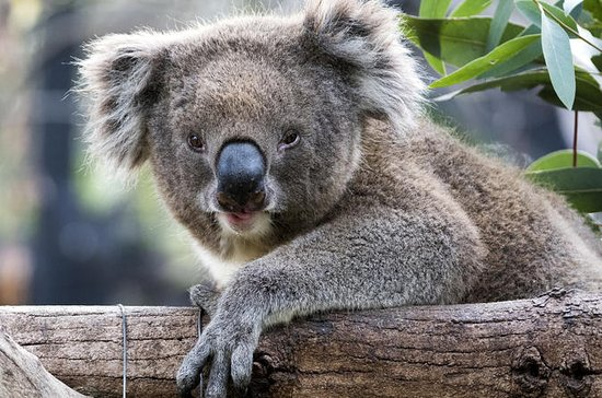 Adelaide Zoo Behind the Scenes...
