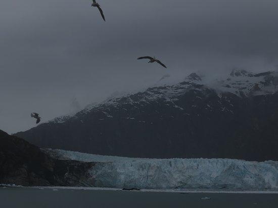 Glacier Bay National Park & Preserve: seagulls