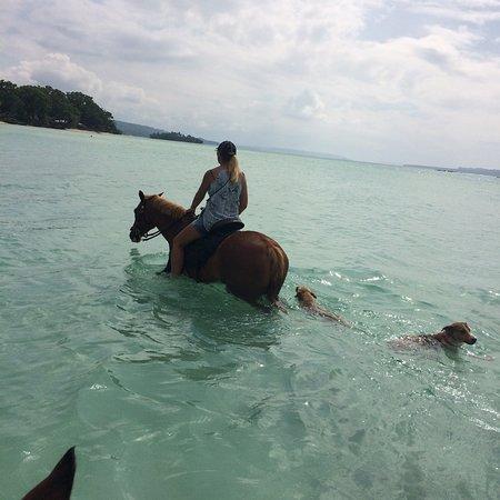 Santo Horse Adventures: Through the mangroves