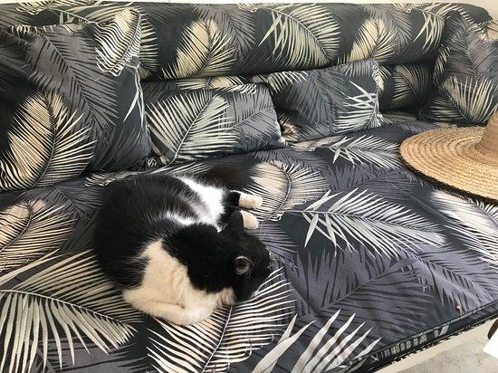 Mama Ruisa: 2 sweet cats roam the grounds