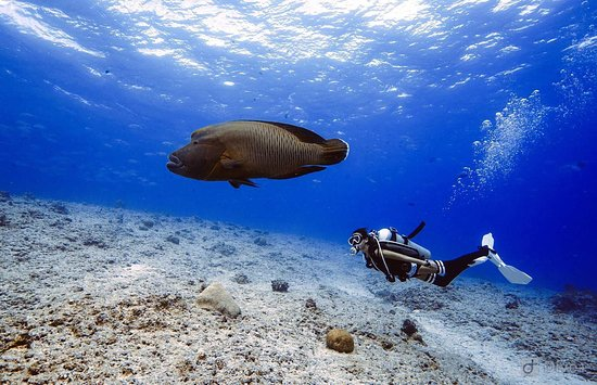 Palau 7th Wonder Dive and Tours: Just keep Diving , Book Now!  Email : palau7w@gmail.com Website :
