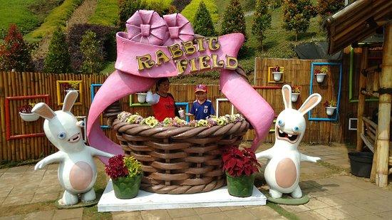 Rabbit Park照片