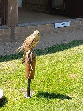The International Centre for Birds of Prey Foto