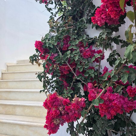 Rocabella Santorini Hotel & Spa Foto