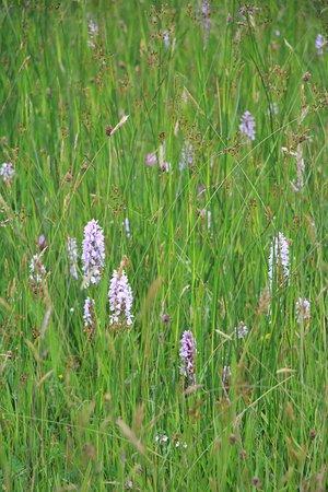 Close Sartfield Nature Reserve照片