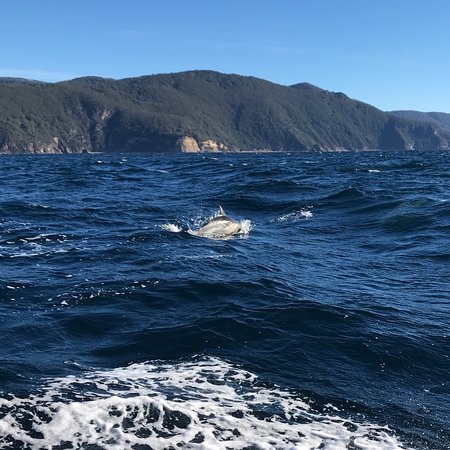 Wild Ocean Tasmania照片