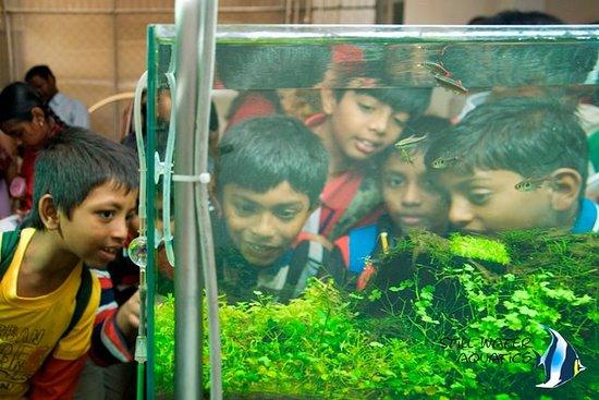 Still Water Aquatics - Nature Aquarium Gallery