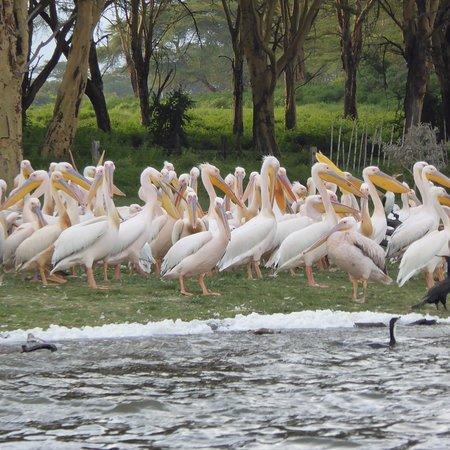 Lake Oloidien : photo0.jpg