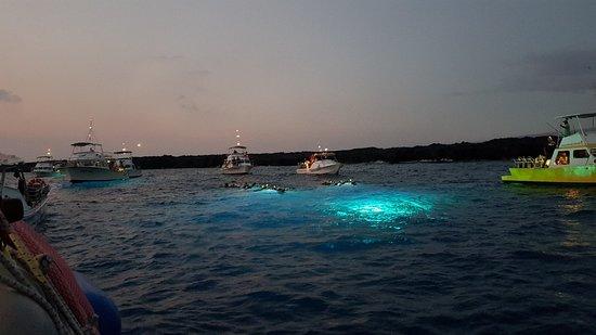 Kona Diving Company: 20180702_192914_large.jpg