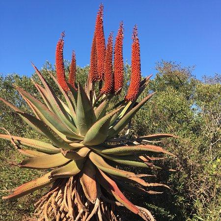 Bontebok National Park: photo1.jpg