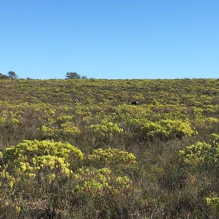 Bontebok National Park: photo4.jpg