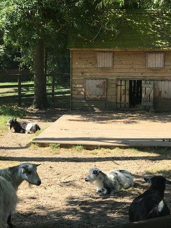 Marsh Farm照片