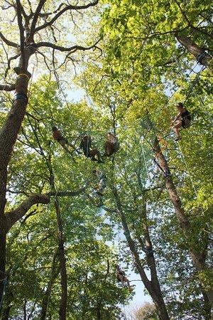 Infini Trees