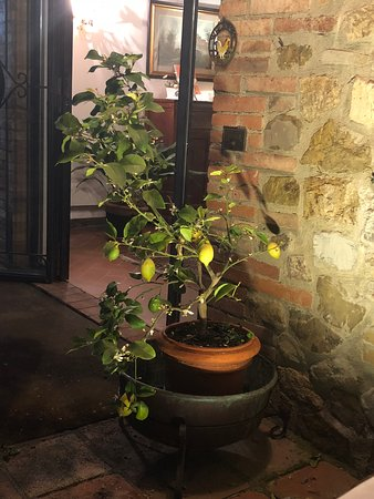 Vagliagli, Italia: Limoeiro na entrada proximo ao restaurante