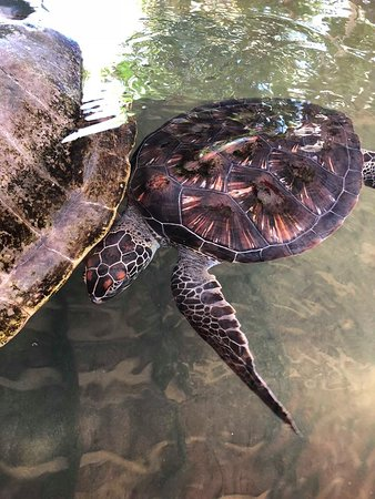 Sea Turtle Farm照片