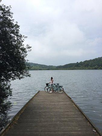 Marty Bike Rental: IMG_2230_large.jpg