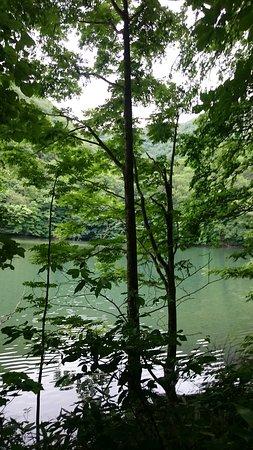 Blue Pond: 林に囲まれた池