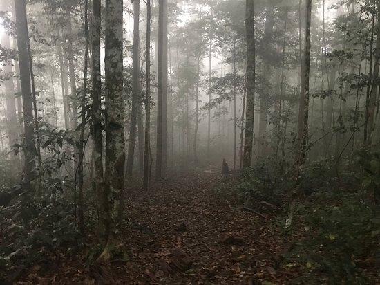Область Тавау, Малайзия: Morning mist in the jungle