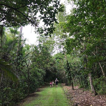 Tree Houses Hotel Costa Rica照片