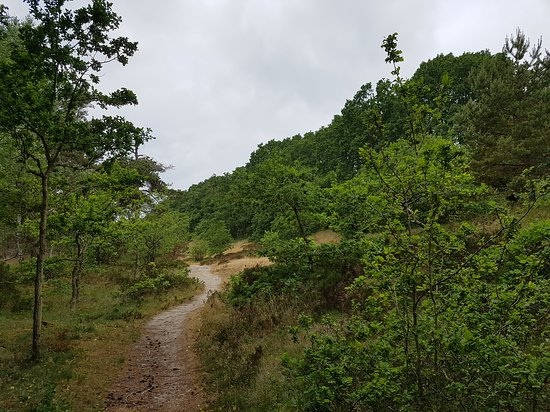 Loderup, Sverige: Ekskog i Hagestads naturreservat (i närheten av parkeringen nedanför Backåkra).